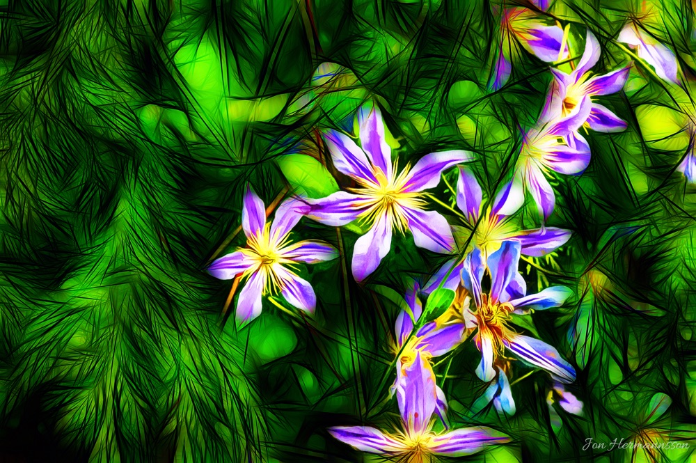 flowers gree purple