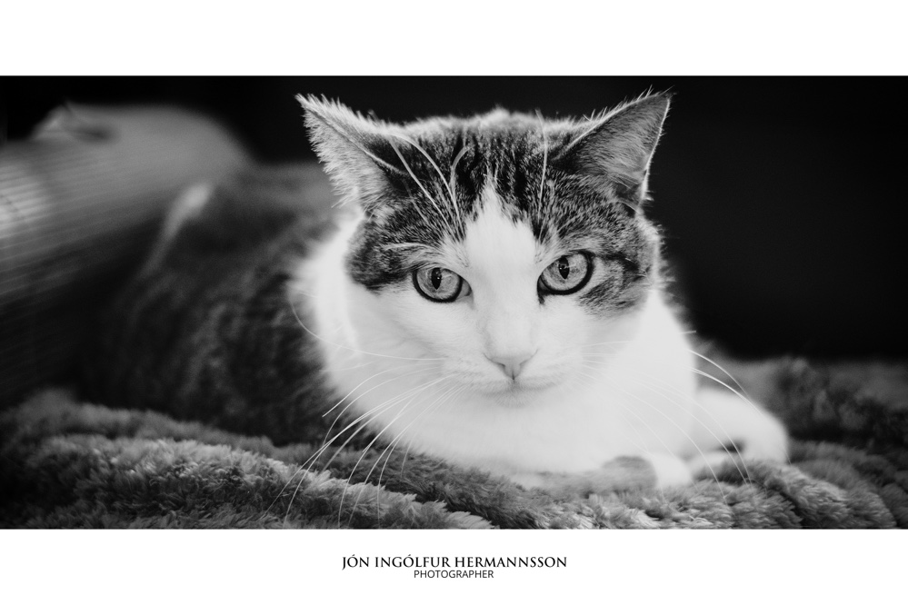 jon-ingolfur-Misty bw on blanket frame